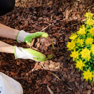 Landscaping Service In Baltimore And Harford
